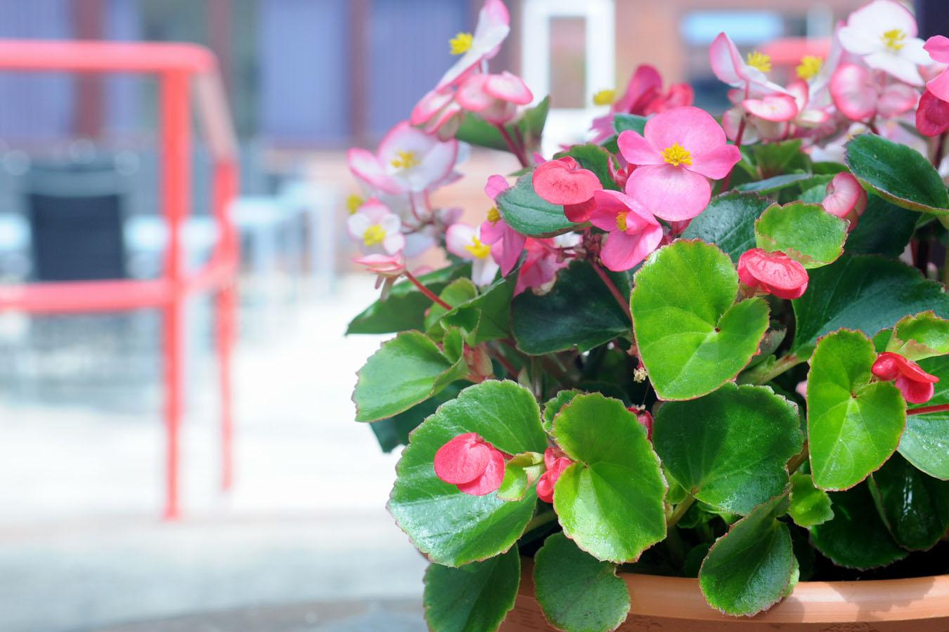 Manorfield Residential Home Flowers